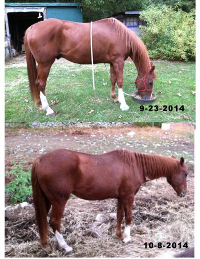10-8-2014 comparison